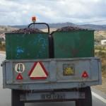 Traubentransport zur Verarbeitung