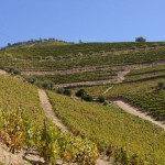 Weinberge in Douro