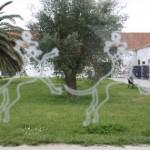 klein_138 Quinta de Casal Branco_43