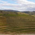 Weinberg am Seitental des Douro
